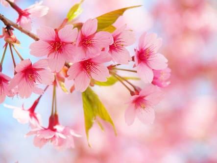 2016年4月入学式・勉強会の為、営業時間変更のお知らせ(4月ご来店予定の方へ)